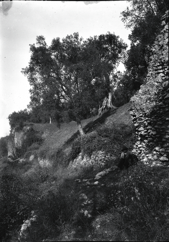 [Tivoli (Italy), olive trees in the countryside and ruins of Villa of Quintilius Varus (?)]