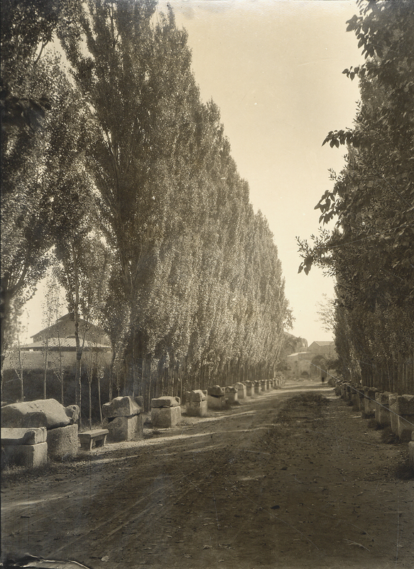 [Arles (France), avenue des Alyscamps with Roman sarcophages]