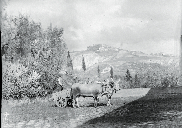 [Abbey of Monteoliveto Maggiore (?) (Italy) in the background, cart with oxen in foreground]
